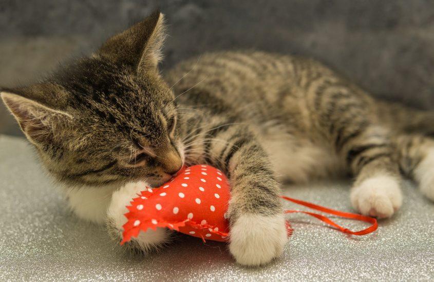 pisica ce roade o inima de material textil